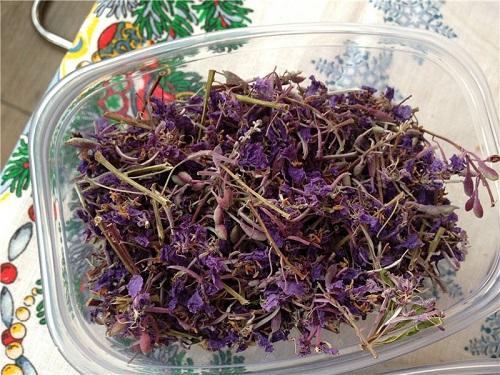 Vysushennye cvetki ivan-chaya