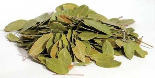 Полезные свойства и применение брусничного листа