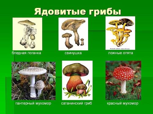 Как помочь при отравлении грибами