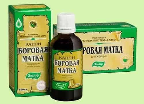 Borovaya matka kapli i fitochaj