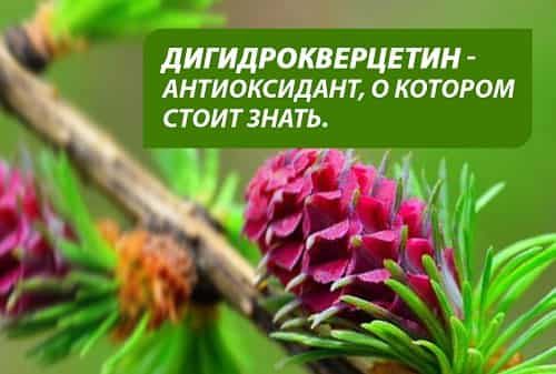 Digidrokvercetin - antioksidant