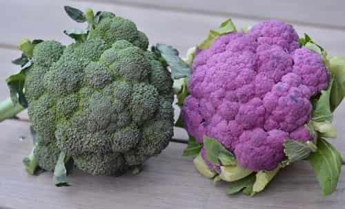 Kapusta brokkoli - poleznye svojstva i vred