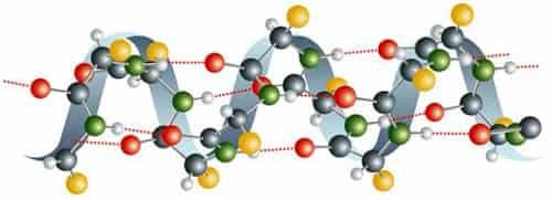 Dlya chego nuzhny aminokisloty – rol' aminokislot v organizme