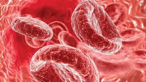 Gemoglobin v ehritrocitah