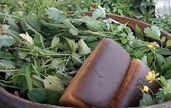 Применение хлеба для удобрений в огороде